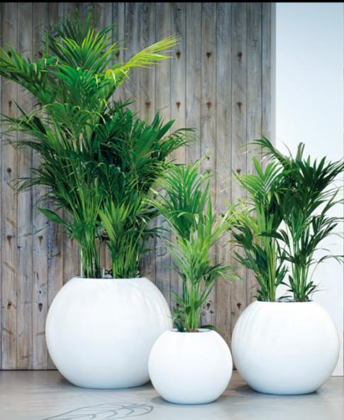 Alquiler de plantas ornamentales